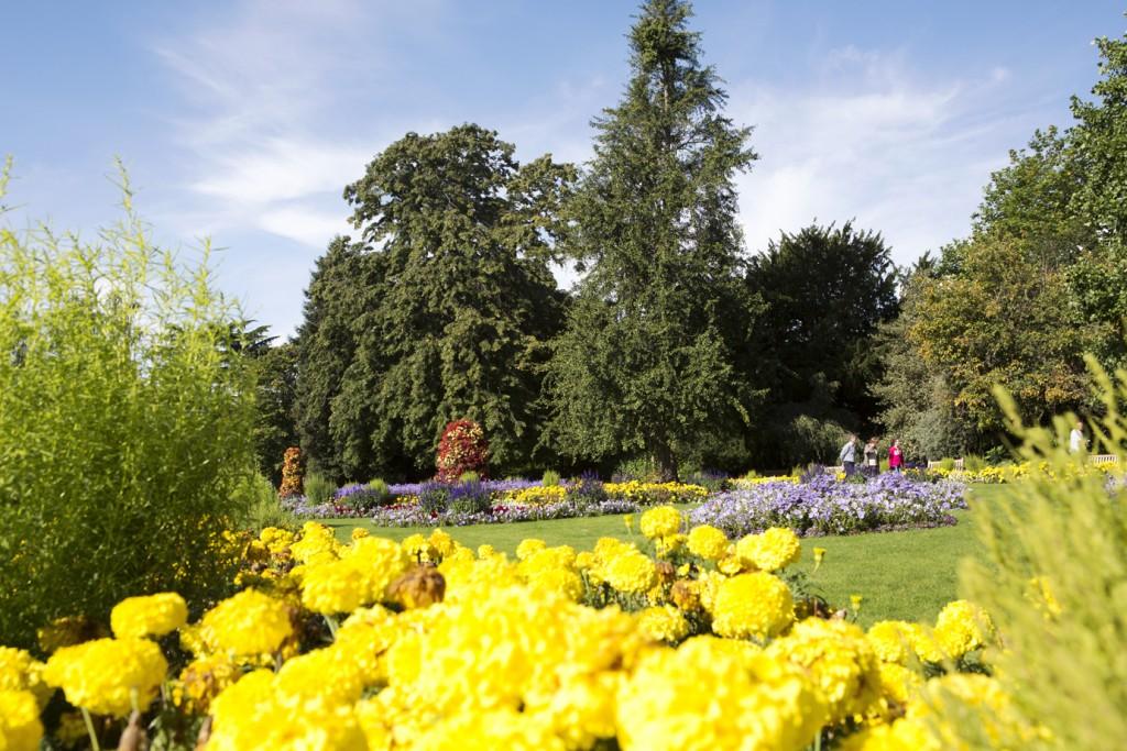 Flowers in Jephson Gardens