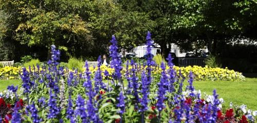Jephson Gardens Flowers